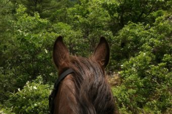 The View Through My Horse's Ears