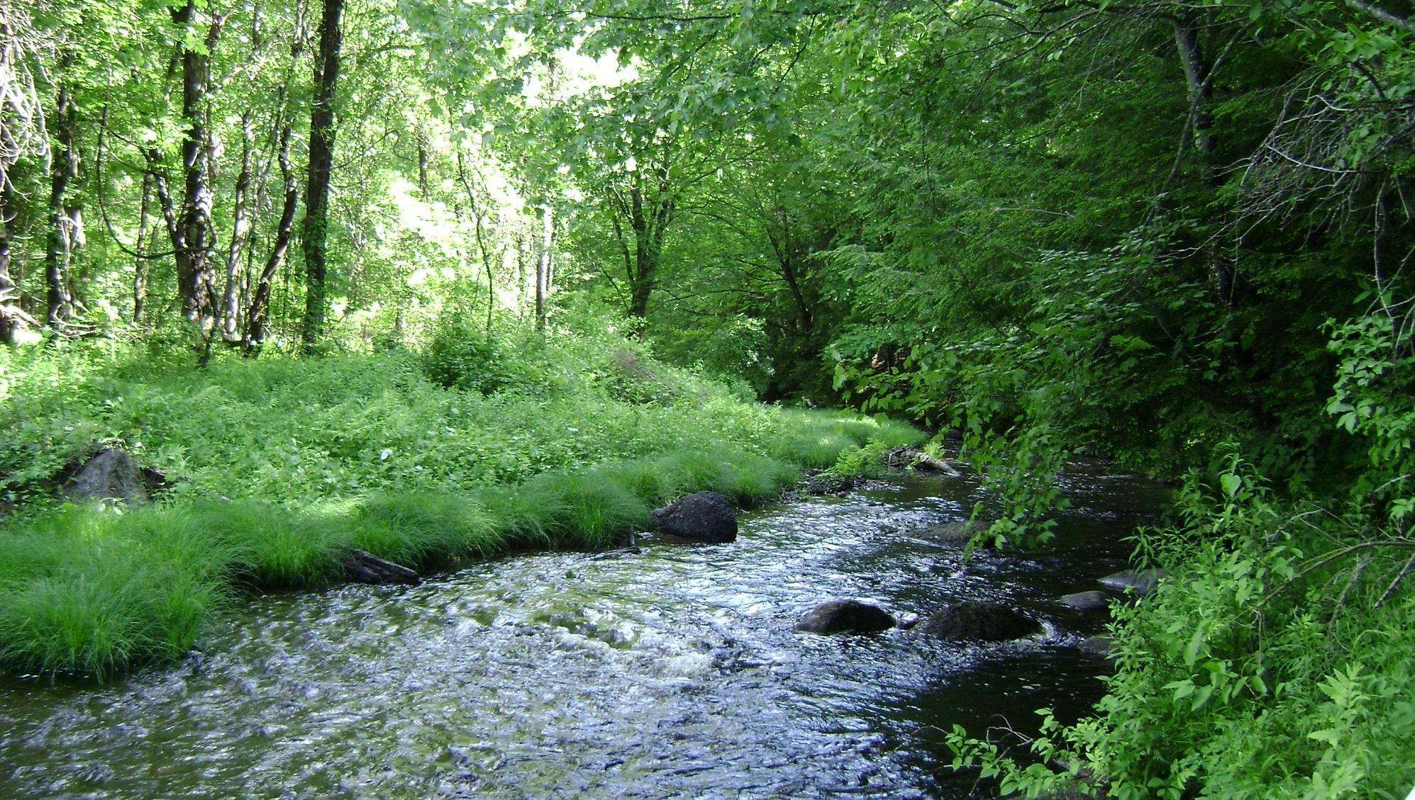 Rand Brook  -  Francestown, NH