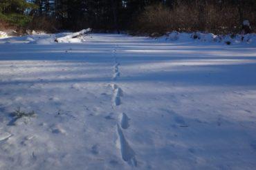 Wildlife tracking