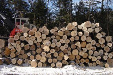 Timber Harvest Begins at Tuthill